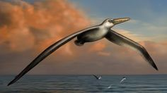This undated image provided by the Bruce Museum shows a reconstruction image of the world's largest-ever flying bird, Pelagornis sandersi, a...