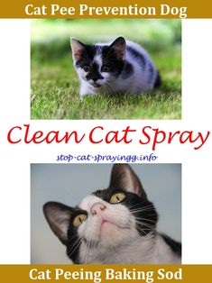 How To Get Rid Of Cat Pee Smell