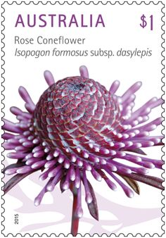 The beautiful Australian wildflowers Rose Coneflower, Spiny Mirbelia, Blue Devil, Golden Rainbow are featured on this new stamp issue. Buy in-store or online here: http://auspo.st/1Rl28ia #StampCollecting #AustralianStamps