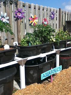 Within Seaside is a public charter school and a garden that serves both as a school garden and a community garden.
