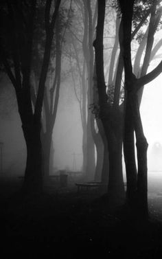 ☾ Midnight Dreams ☽ dreamy & dramatic black and white photography - night forest Black White Photos, Black And White Photography, Arte Obscura, Dark Forest, Foggy Forest, Light And Shadow, Shades Of Grey, Belle Photo, Dark Art