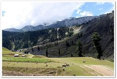 Gurez Meadows, Kashmir