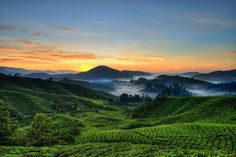 Cameron Highlands, Malaysia. Gonna say it, reminds me of the Shire. Boom, Tolkien.