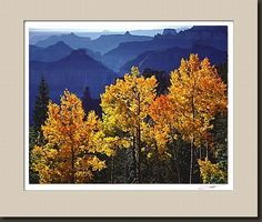 Aspen Glow Best Landscape Photography, Cool Landscapes, Aspen, Glow, World, Painting, Beautiful, Art, Art Background