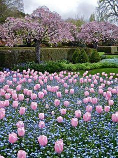 Flowers Nature, Pretty Flowers, Pink Tulips, Flower Aesthetic, Flower Photos, Flower Cards, Garden Inspiration, Beautiful Gardens, Flower Power