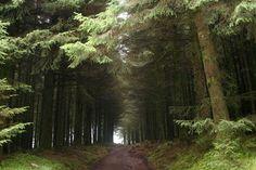 fernworthy_forest.jpg (848×565)