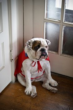 OMG i LOVE him   ...........click here to find out more     http://googydog.com