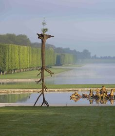 Giuseppe Penone's Incredible Tree Sculptures at Versailles