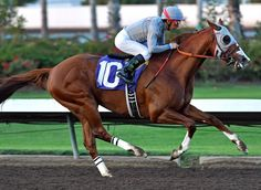 California Chrome winning the Winter Challenge at Los Alamitos courtesy of photographer Gary Tasich.