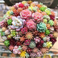 Beautiful succulents!!