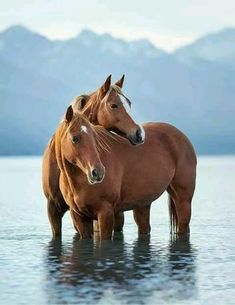 Beautiful horses in this perfect setting. Beautiful horses in this perfect setting. All The Pretty Horses, Beautiful Horses, Animals Beautiful, Cute Horses, Horse Love, Horse Photos, Horse Pictures, Animals And Pets, Cute Animals