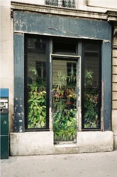 """""""Imagine if old store fronts were used to house plants like """"storage units"""" for green thumbs. generations of families could pass on these plants and then Interior Flat, Interior And Exterior, Interior Design, Pergola, Window Plants, Shop Fronts, Vintage Design, Architecture, Indoor Garden"""
