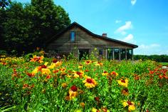 West Tennessee farm near Gleason.