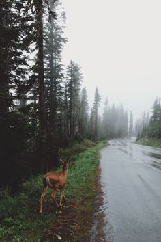 Find images and videos about nature, animal and forest on We Heart It - the app to get lost in what you love. Beautiful World, Beautiful Places, Into The Wild, Nature Sauvage, Adventure Is Out There, Belle Photo, The Great Outdoors, Wonders Of The World, Mother Nature