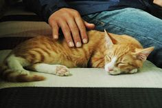 Cat Cafe, South Korea Cat Cafe, South Korea, Cats, Animals, Gatos, Animales, Kitty Cats, Animaux, Cat