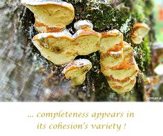 ... #completeness appears in its cohesion's variety !