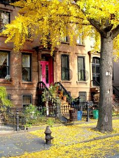 Brooklyn, New York in fall.... Oh how I love fall