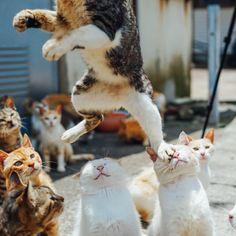 猫さんが踏み台にされちゃった! その瞬間を目撃した周りの猫の反応が妙に面白い (*´∀`*)! 4枚 | エウレカ!eureka! - もふもふ犬猫動画