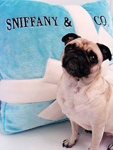 Sniffany & Co.dropped in boyfriend's lap