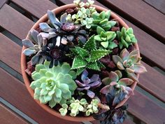 DIY table top succulent garden - theurbanwife.com