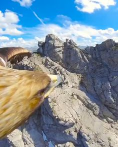 Fly like an eagle with this spectacular GoPro footage from a golden eagle soaring over Nebelhorn Peak in Germany. Animals And Pets, Funny Animals, Cute Animals, Eagle Animals, Animals Sea, Nature Animals, Wild Nature, Reasons To Smile, Birds Eye View