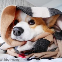 When You Gotta Go To Bed Early Because You Gotta Be An Adult Tomorrow, by tibbythecorgi