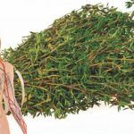 Arată mai tânără în numai 5 minute! Masca împotriva ridurilor cu efect de lifting, costă mai puțin de 1 leu - Mai, Herbs, Health, Plant, Health Care, Herb, Salud, Medicinal Plants