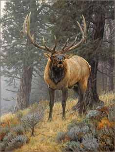 Bull elk oil painting by wildlife artist Bruce Miller animals,wildelife Wildlife Paintings, Wildlife Art, Animal Paintings, Elk Pictures, Bull Elk, Hunting Art, Deer Art, Moose Art, Animal Totems