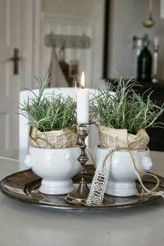 Lavender ♡