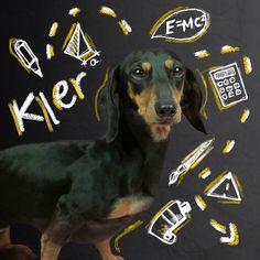 Read Los Polinesios 💫💓 from the story fondos de pantalla by andreadiazsosa with reads. Dog Wallpaper Iphone, Unicorn Art, Lol Dolls, Fan, Dog Art, Cute Dogs, Digital Prints, Chibi, Puppies