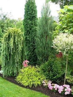 conifer garden ideas 2 tall conifers but different textures beautiful conifer shrub tree plant combinations and landscape designs conifer garden design ideas australia garden landscape design Privacy Landscaping, Front Yard Landscaping, Landscaping Software, Landscaping Design, Privacy Hedge, Privacy Plants, Privacy Screens, Landscaping With Trees, Arborvitae Landscaping