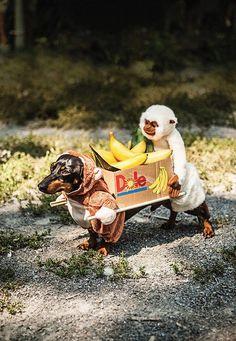 Sausage Dog fancy dress - monkey banana seller