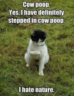 cat in cow poop