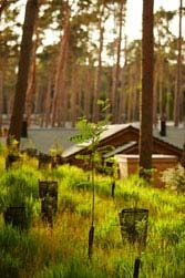 Luxury Treehouses now available to book at Elveden Forest | Center Parcs