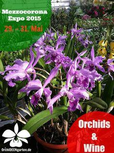 Orchideengarten Karge – Google+ Mezzocorona Expro - Orchids&Wine - Orchideengarten Karge  Vom 29. - 31. Mai findet im Trentino in Mezzocorona die Expo 2015 statt. Am Festival Orchids & Wine nimmt teil, wie jedes Mal, der Orchideengarten Karge aus Dahlenburg mit seinen Orchideenschätzen.