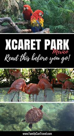 Top Tips for Visiting Xcaret Park in Mexico with kids. Read this before you go!   Family Travel   Travel with kids   Toddler Travel   #familytravel #toddlertravel #travelwithkids #mexico #mayanriviera