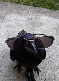 "avas-poltergeist: "" Crow and Raven Arrow. avas-poltergeist: "" Crow and Raven Arrow. "" – … avas-poltergeist: "" Crow and Raven Arrow. Funny Animal Pictures, Funny Animals, Cute Animals, Animal Fun, Crows Ravens, Reaction Pictures, Homestuck, Animal Memes, Funny Memes"