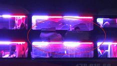 Chiếc xe khách đang lưu thông trên đèo giữa đêm khuya thì bị nhóm thanh thiếu niên lạng lách trước đầu xe rồi ném đá, khiến hành khách hoảng loạn Sáng 2-4, đại tá Hà Công Thượng, Trưởng Công an huyện Lắk, tỉnh Đắk Lắk, cho biết cơ quan công an đang điều tra làm rõ vụ ném đá vào xe khách giường nằm trên Quốc lộ 27.  Chiếc xe khách bị ném đá vỡ kính. Ảnh B.