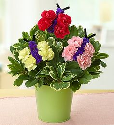 Butterflies in Bloom™- •Three pastel mini carnation arrangements crafted to resemble butterfly wings, gathered with purple statice  #butterflies #butterflyflowers #spreadyourwings $39.99