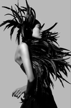 black feather opulence / plume plumage / wings / cov / magazine / Silouhette