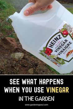 Vinegar Is A Gardener's Best Friend. Here Are 11 Clever Uses in The Garden Vinegar can simultaneously enhance the life of a plant and kill weeds.Vinegar can simultaneously enhance the life of a plant and kill weeds. Garden Yard Ideas, Lawn And Garden, Garden Projects, Garden Landscaping, Landscaping Design, Garden Tools, Hydrangea Landscaping, Garden Shop, Patio Ideas
