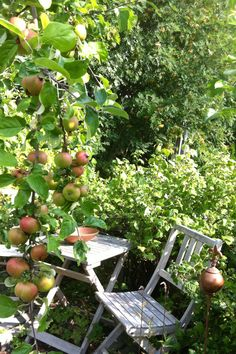 In the shade of the apple tree :-)