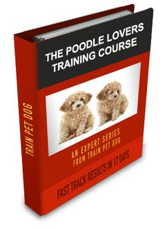 Poodle Training: Learn All About Training Poodles & Taking Care of Them