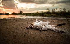 The Death of the Swan - La muerte del cisne. © BARBIANI Andres Leonardo. Follow me in-Sígueme en: https://www.facebook.com/AndresBarbianiFotografo https://500px.com/andresbarbiani http://www.pinterest.com/andresbarbiani/ Please share Por favor comparte. Thanks-Gracias.