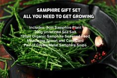 Grow Your Own Samphire - Somerset Samphire Unrefined Sea Salt, Great British Menu, Conservatory Plants, Seed Raising, Dining Menu, Plant Sale, Grow Your Own, Terracotta Pots, Fish And Seafood