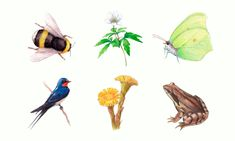 Tulostettava kevätkortti lapsille | Luonto-Liiton Kevätseuranta Kids Education, Animals, Early Education, Animales, Animaux, Animal, Animais