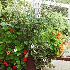 Butterfly Container Garden Ideas: A. Bronze fennel (Foeniculum vulgare 'Rubrum') -- 2;  B. Nasturtium (Tropaeoleum 'Scarlet Gleam') -- 4;  C. Sweet potato vine (Ipomoea batatas 'Tricolor') -- 1;  D. Sage (Salvia officinalis) -- 1