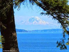 The Galloping Gardener: Windcliff   Dan Hinkleyu0027s Wondrous Waterview Garden  In Washington · SeattleWashington