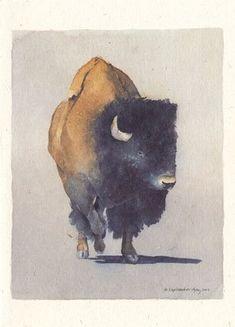 Buffalo/ Bison