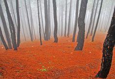 Misty Pines, Kausani, India